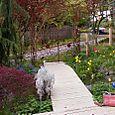 Pat_Garden_in_Seattle_005