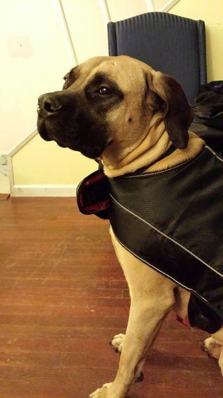 Lemmy in coat