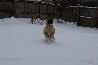 Lemmy Snow 3