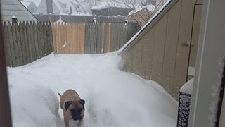 Snow Lemmy